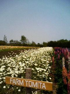 北海道旅行2 富良野のお花畑